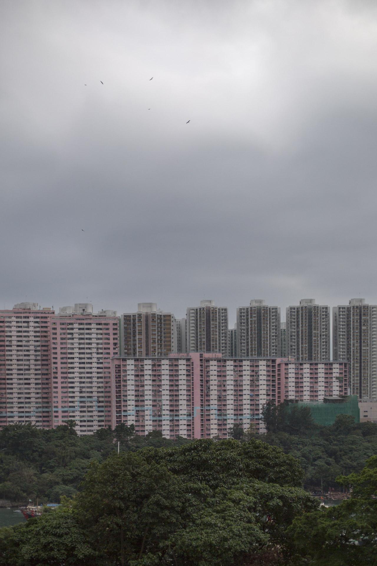 HK-Arbres remarquables-0689